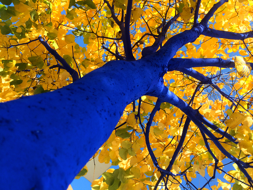 Konstantin Dimopoulos Blue Trees Project Environnement Bleu Arbre Art Brève