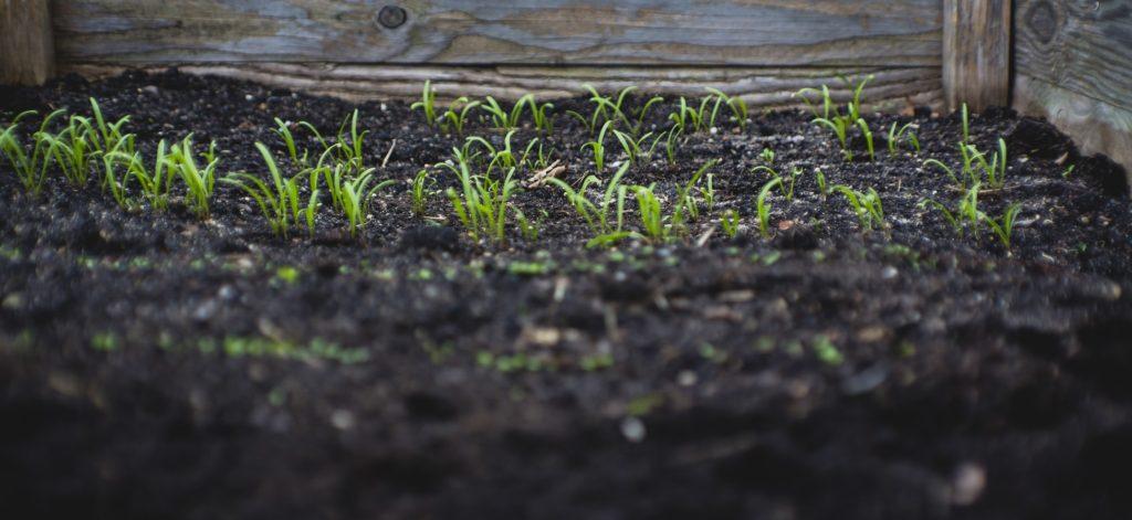 agriculture urbaine, jeunes pousses