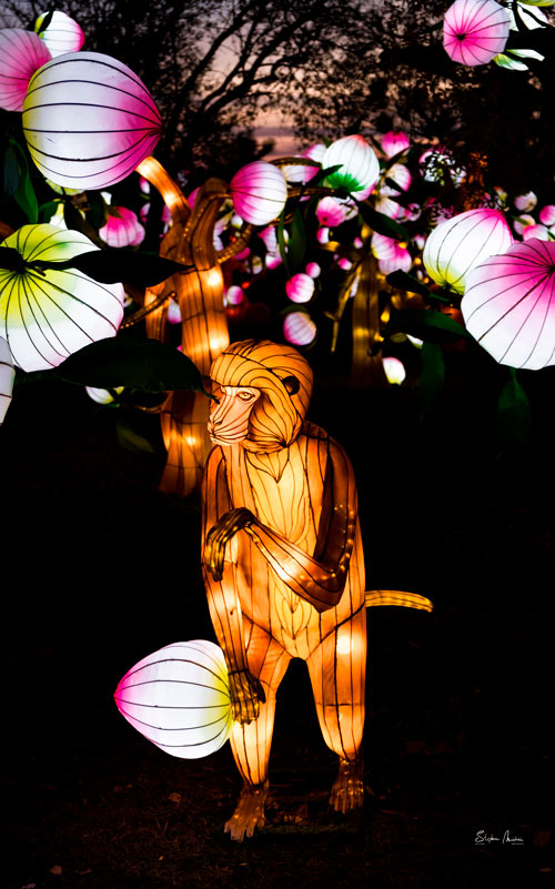 lanternes-chine-gaillac